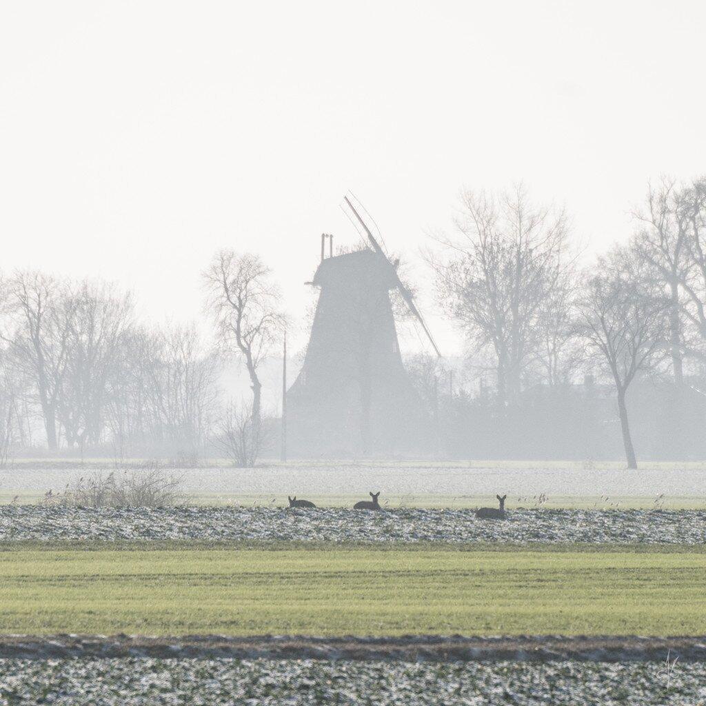 Pierwsze dni stycznia. Śniegu jeszcze brak. Na szczęście wiatrak w Palczewie nadal jest tam, gdzie być powinien.