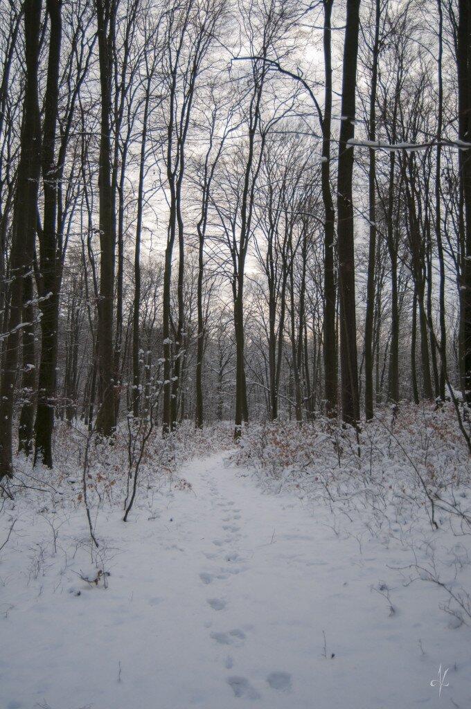 Bardziej zimowo, bliżej domu, czyli elbląska Bażantarnia